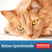 Podcast Katzen-Sprechstunde von Antenne Niedersachsen